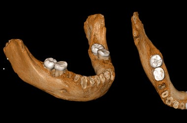 Human_Relative_Neanderthal_China_Siberia