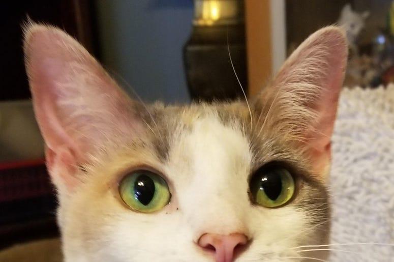 Adopt A Cat Foundation