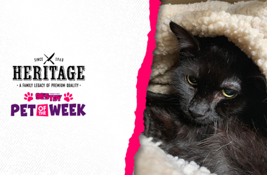 Bennett's PSPCA Pet of the Week, Antoinetta, is ready for adoption in Philly!