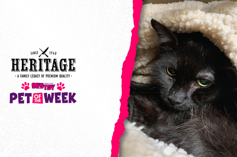 Bennett's PSPCA Pet of the Week,Antoinetta, is ready for adoption in Philly!