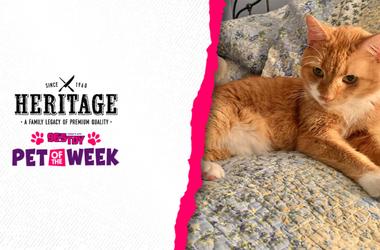 Meet Sebastein, Bennett's PSPCA Pet of the Week