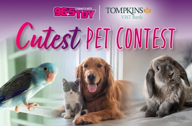 CutestPetContest