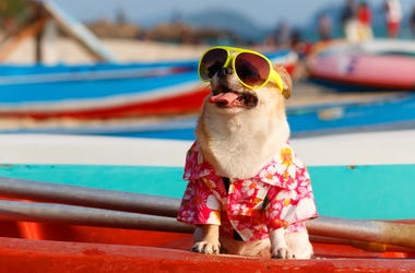 Top Ways to Keep Your Pets Cool During The Heat of Summer in Philadelphia