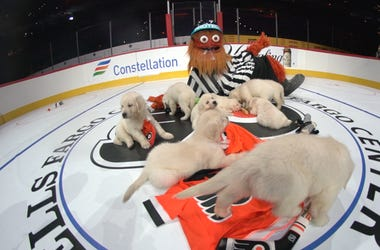 Watch Gritty Referee Puppies Playing Hockey Gritty's adorable 'Pups on Ice' Wednesday night at the Wells Fargo Center