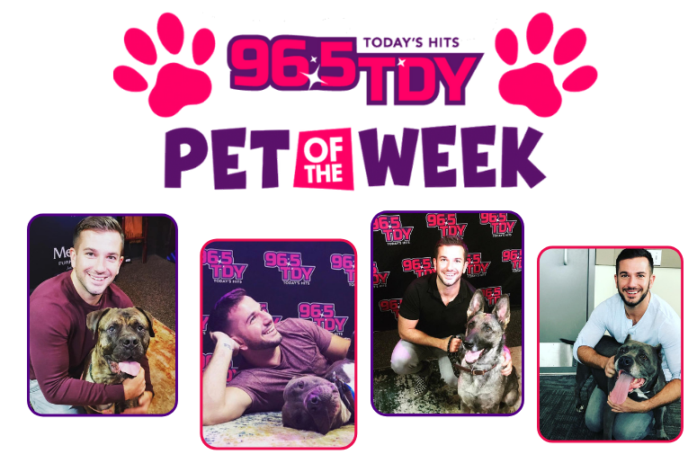 Pet of the Week with Bennett on 96.5 TDY in Philadelphia 965 tdy philly