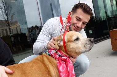 Meet Guppy, Bennett's PSPCA Pet of the Week