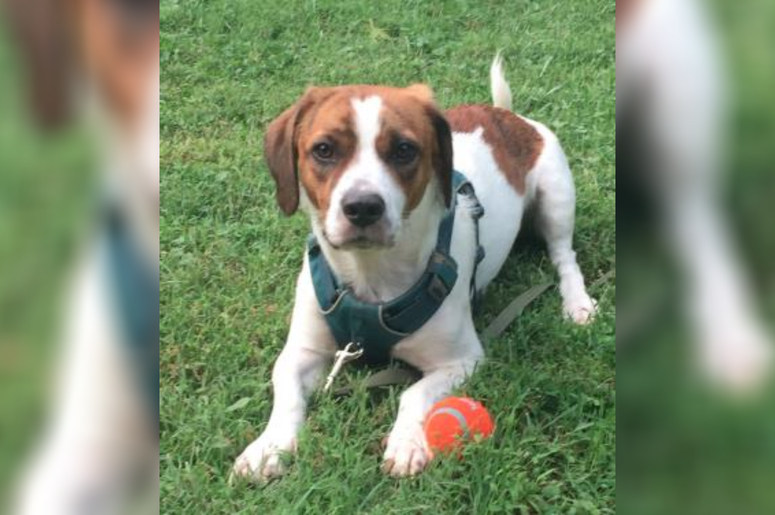 PSPCA Pet of the Week with Bennett: Buddy
