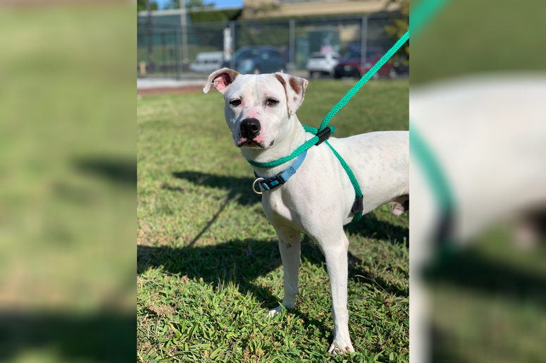 PSPCA Pet of the Week with Bennett: Chad