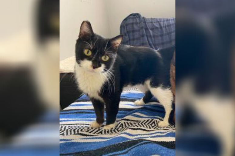 PSPCA Pet of the Week with Bennett: Dates