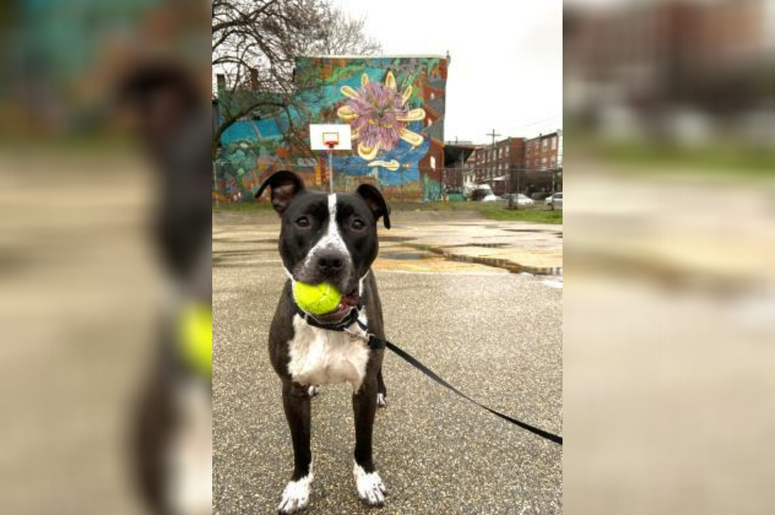 PSPCA Pet of the Week with Bennett: Sosa