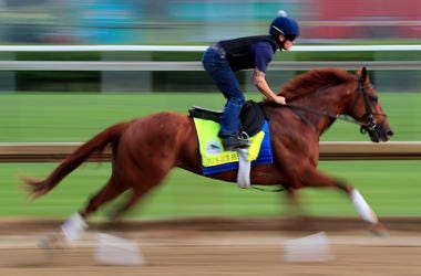 The horse Plus Que Parfait getting ready for the Kentucky Derby
