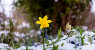 winter-flower-GettyImages-1033877590.jpg