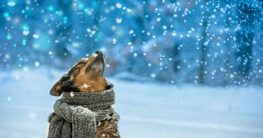 dog-scarf-winter-GettyImages-1082960742.jpg