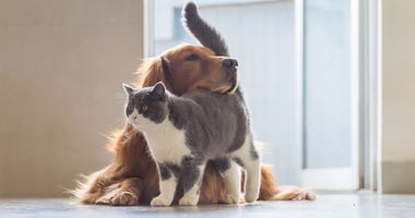 cat-dog-GettyImages-1087763026.jpg