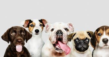 puppies-GettyImages-1094310798.jpg
