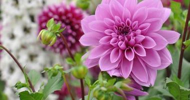 flowers-GettyImages-1127402003.jpg