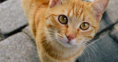 cat-GettyImages-1144717811.jpg