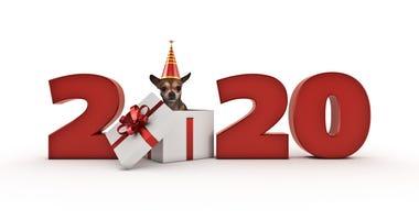 2020-dog-GettyImages-1166709545.jpg