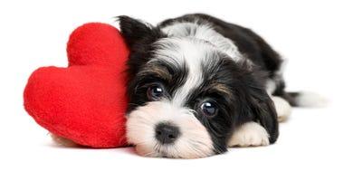 dog-valentine-GettyImages-505126352.jpg