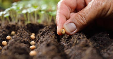 plant-seeds-GettyImages-527229644.jpg