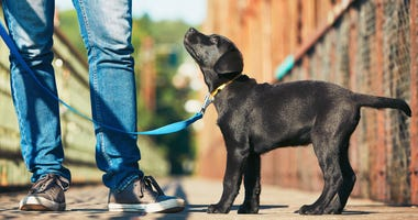 training-puppy-GettyImages-589434932.jpg