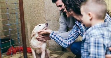 pet-adoption-GettyImages-919818562.jpg