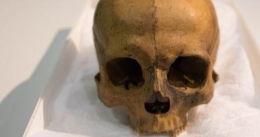 human-skull-sipa_20704754-e1520448362771.jpg
