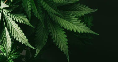 Manchester Man Gets Almost 3 Years For Pot Scheme