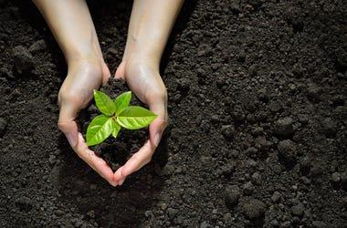 garden-soil-GettyImages-637583458.jpg