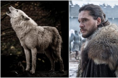 dire wolf with Jon Snow