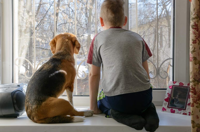 Connecticut families and pets need help during government shutdown