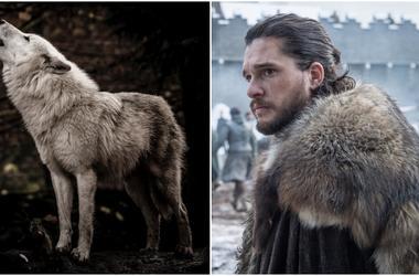 dire wolf with Jon Snow