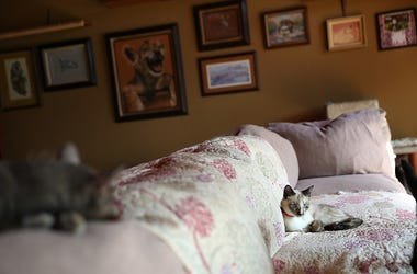Cat On A Couch