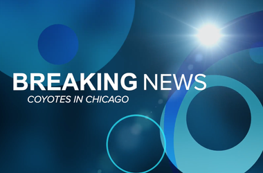 Breaking News, Scotty Kay, US*99 Morning Show, Coyote