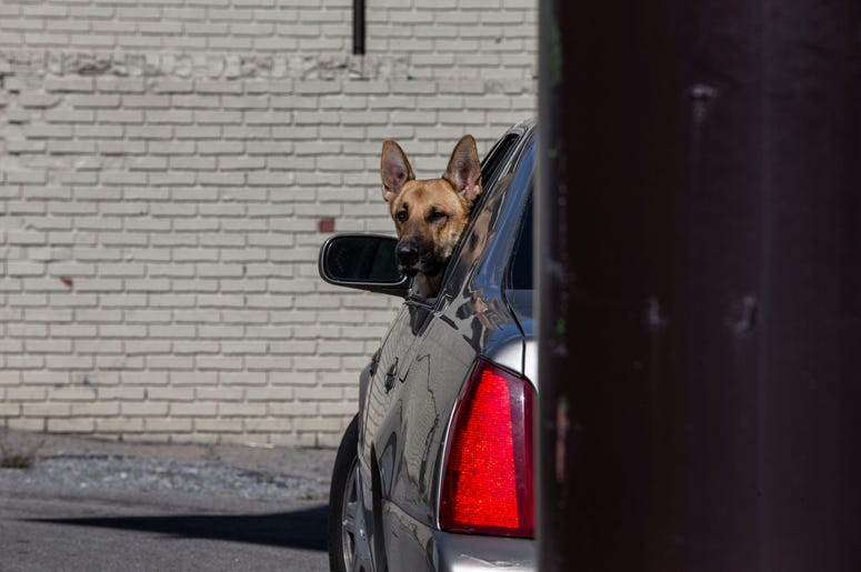 dog looking out of window of car