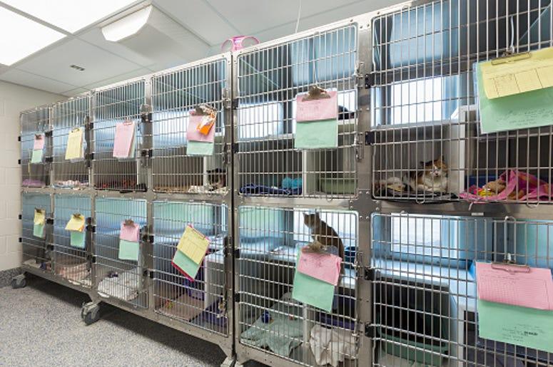 Animal Shelter, Dog, Home, Family, Hours