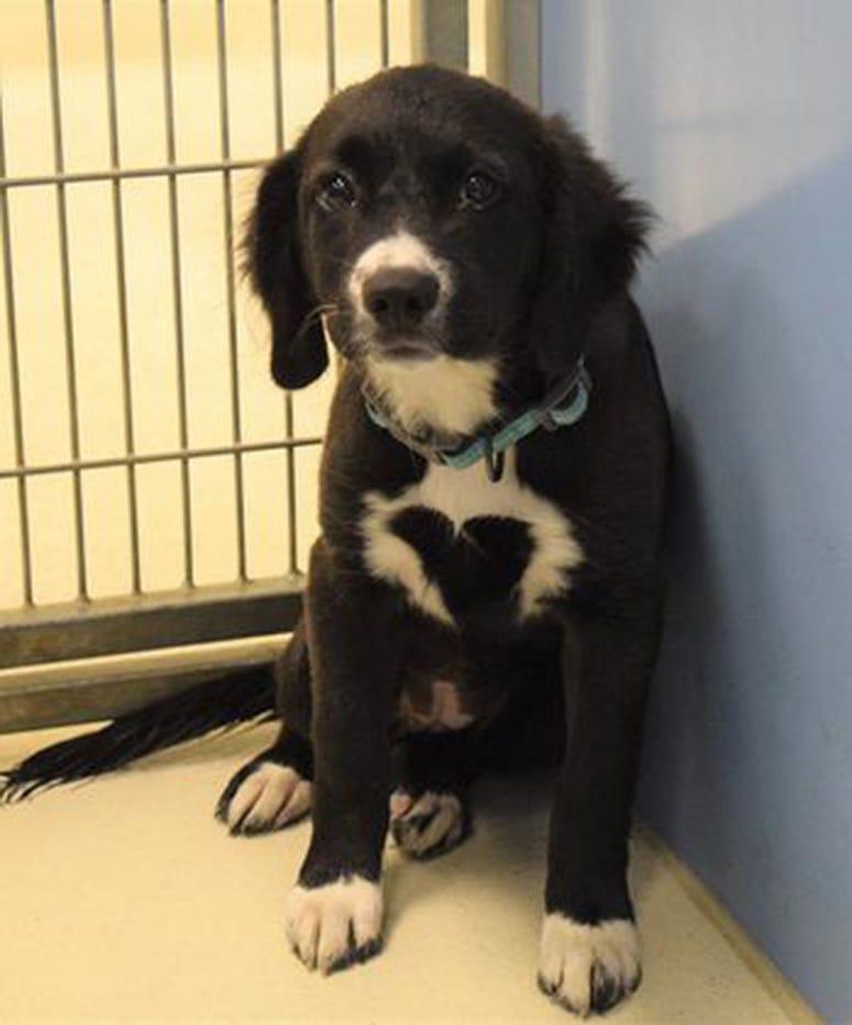 Good Vibes, Border Collie, Dog, Adopt, Animal Shelter