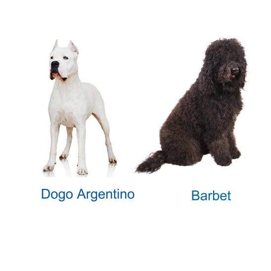 Dog, New Dog Breed, American Kennel Council