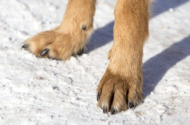 Paws In The Snow