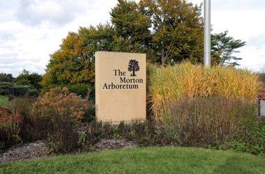 Morton Arboretum, Chicago, Local, Light Show, Holiday, Tradition