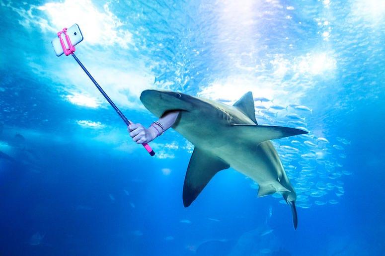 Shark Selfie