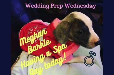 Wedding Boss Wednesday Royal Pup