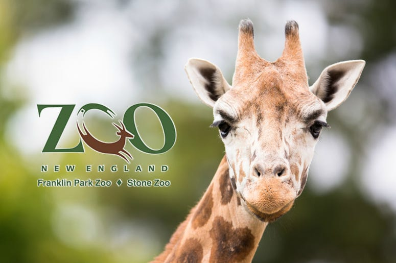 Can't Beat Kennedy's Franklin Park Zoo And Stone Zoo Ticket Giveaway