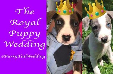 Royal Puppy Wedding
