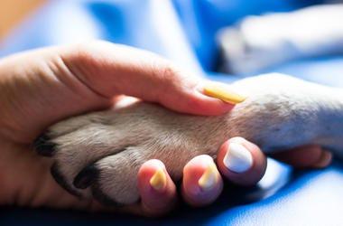 Dog and human