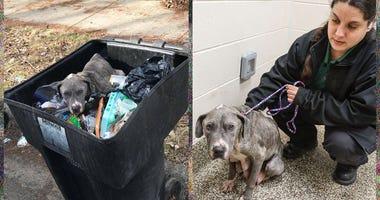 Dog Found In Trash Can