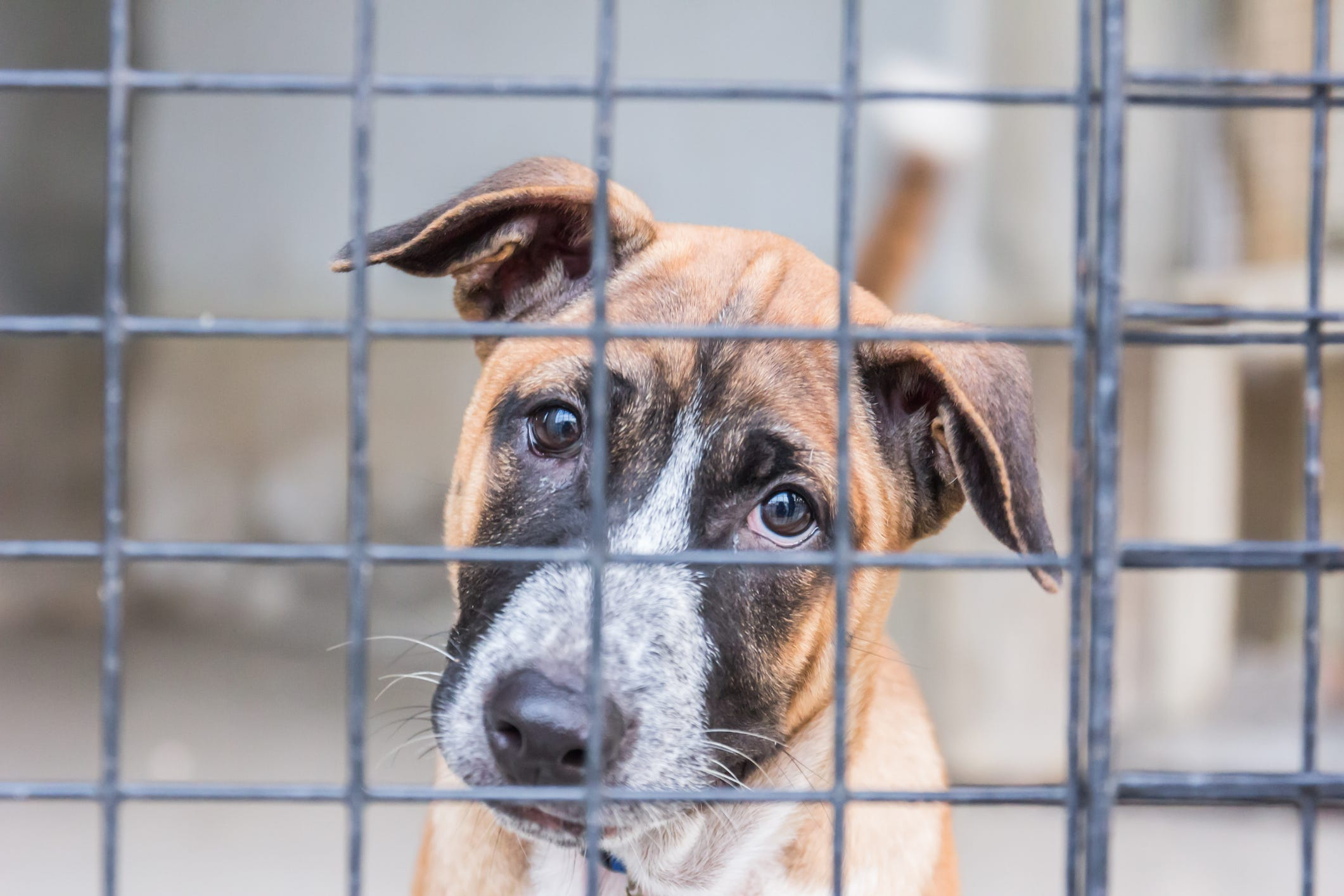 Pet Adoption Fees Just $25 On May 4 For 'Empty The Shelters Day'