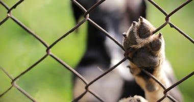 Dog paw on fence
