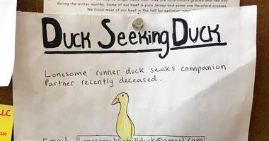 Duck seeking duck.