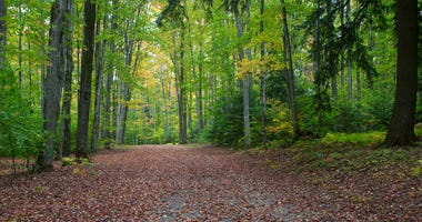autumn forest in Michigan